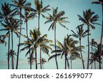 coconut palm in hawaii  usa. | Shutterstock . vector #261699077