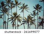 coconut palm in hawaii  usa. | Shutterstock . vector #261699077