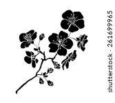Twig Sakura Blossoms. Vector...