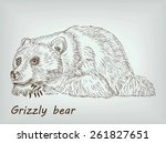 grizzly bear lies on his feet.... | Shutterstock .eps vector #261827651