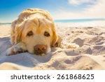 Golden Retriever Dog Relaxing ...