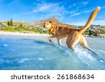 Stock photo terrier dog having fun running jumping and playing at the beach on summer holidays 261868634