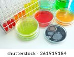 colorful fluid in  glass ware... | Shutterstock . vector #261919184