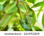 Постер, плакат: Green snake in tropical