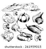 hand drawn vegetables | Shutterstock .eps vector #261959015