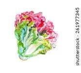 lollo rosso lettuce on white... | Shutterstock .eps vector #261977345