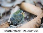 nestlings | Shutterstock . vector #262034951