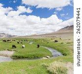 lush green mongolian landscape... | Shutterstock . vector #262079441