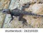 lizard | Shutterstock . vector #26210320