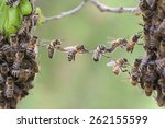 Stock photo trust in teamwork of bees linking two bee swarm parts bees make metaphor for business concept of 262155599