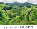 Grapevines In The Hills Of...