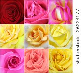 Beautiful Collage Of Roses Fro...