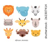 cute african animal portrait... | Shutterstock .eps vector #262307414