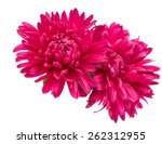 Pink Aster Flower On A White...