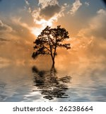 Water And Tree Sunset. Exosolar ...