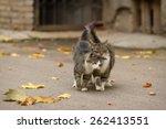 Walking couple of two loving cats near falling foliage