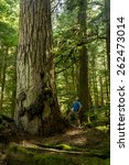 A Male Hiker Looks Up At A...