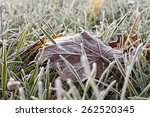 Frozen Grass  The Surface Of...