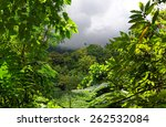 Tropical Forest In Rainy Weather