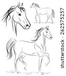 horse. vector drawing. | Shutterstock .eps vector #262575257