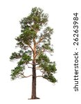 Pine Tree Isolated On White...