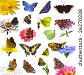 Isolated European Butterflies...