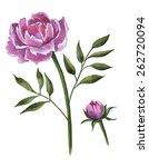 peonies | Shutterstock . vector #262720094
