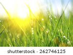 Stock photo grass fresh green spring grass with dew drops closeup sun soft focus abstract nature background 262746125