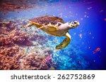 Hawksbill Turtle   Eretmochely...