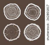 vector illustration tree rings... | Shutterstock .eps vector #262801817