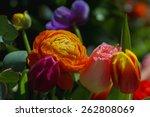 pionyi tulips   bouquet | Shutterstock . vector #262808069