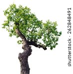 tree on white background | Shutterstock . vector #262848491