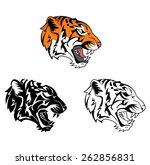coloring book tiger face... | Shutterstock .eps vector #262856831