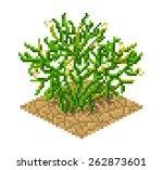 peganum harmala plant in pixel...   Shutterstock .eps vector #262873601