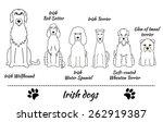 Set Of Irish Dogs. Vector...
