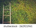 Ladder On Trimmed Tree Wall