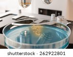 Petri Dish With Bacteria On...