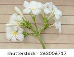 white plumeria on wood... | Shutterstock . vector #263006717