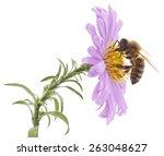 Honeybee And Blue Flower Head...