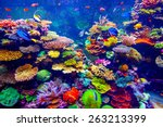 coral reef and tropical fish in ... | Shutterstock . vector #263213399