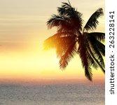 coconut palm tree silhouette... | Shutterstock . vector #263228141