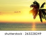 coconut palm tree silhouette... | Shutterstock . vector #263228249