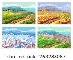 rural landscape with vineyard... | Shutterstock .eps vector #263288087