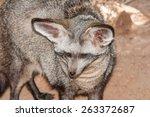 the face of a bat eared fox ... | Shutterstock . vector #263372687