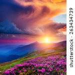 Stock photo great view of the magic pink rhododendron flowers on summer mountain dramatic overcast sky before 263434739