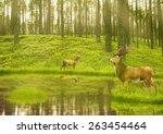 Deer Bucks In Summer Velvet...