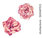 tender pastel pink rose flower... | Shutterstock . vector #263469521