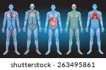Постер, плакат: Internal organs of the