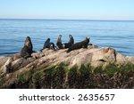 sea otters | Shutterstock . vector #2635657