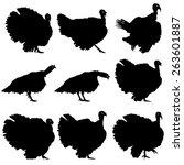 Silhouettes Of Turkeys. Vector...